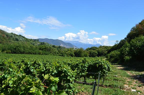 franciacorta wine advocate monica larner