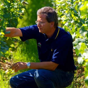 Organic conversion in Franciacorta: Arturo Ziliani tells Guido Berlucchi's story in an interview