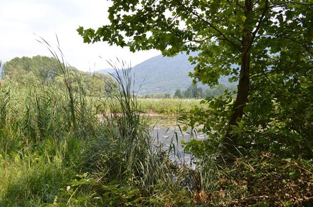 marsh italy northern